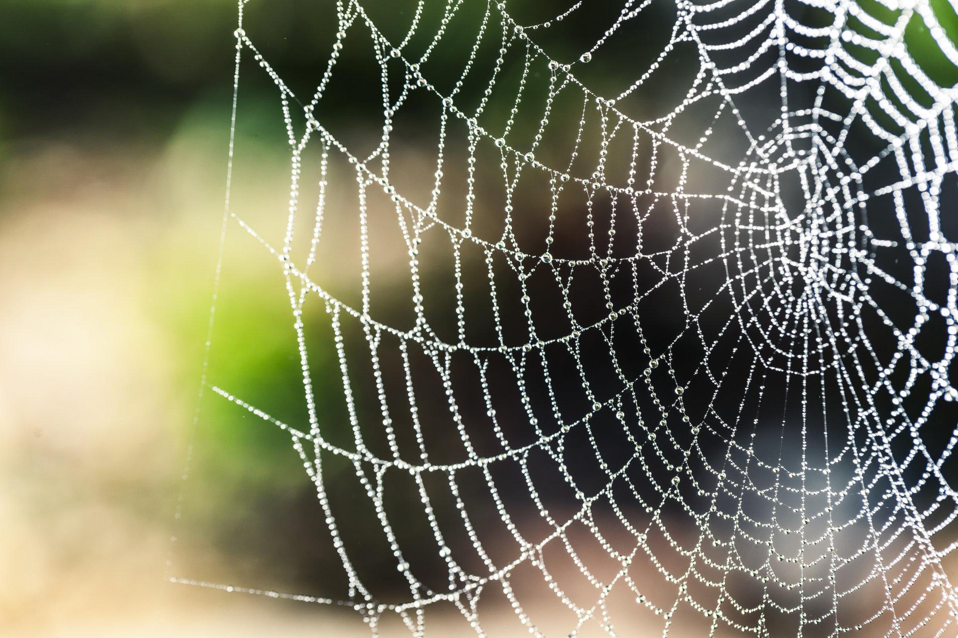 Fort Worth Web